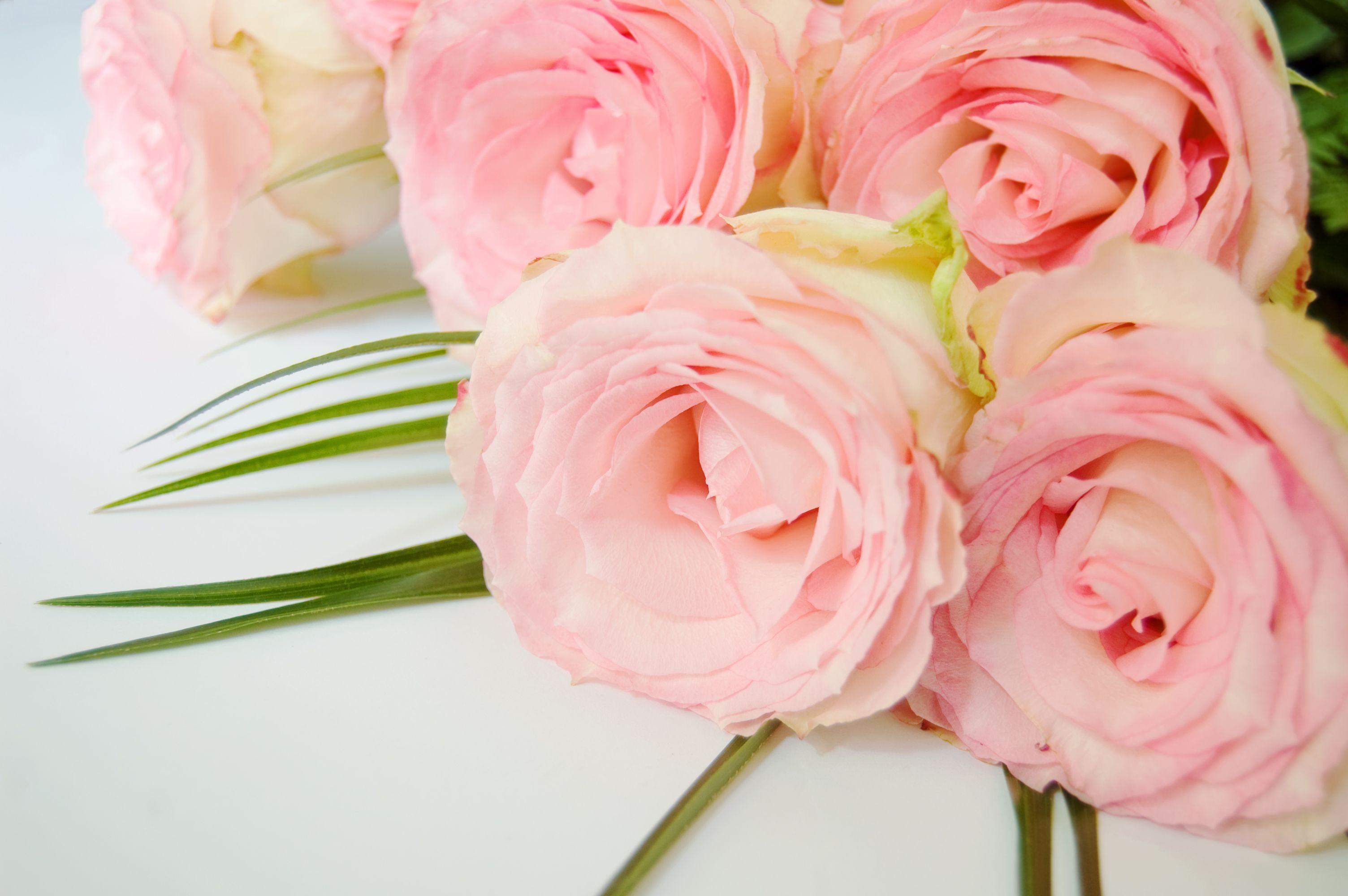 roses_10804802