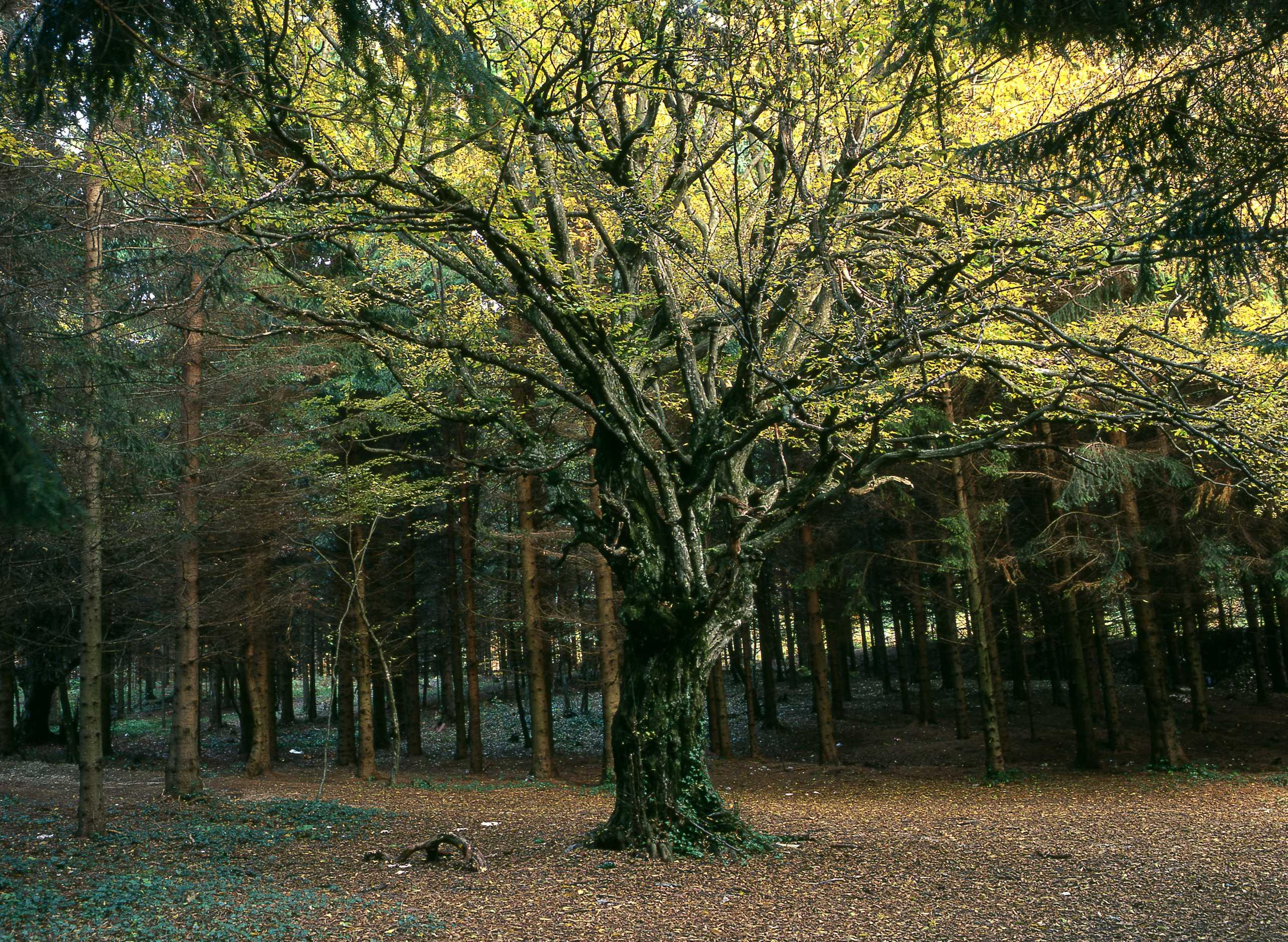 tree-in-forest.jpg