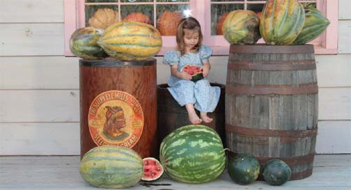 Sasha Gettle, at Baker Creek Village, in Mansfield, at the Mercantile modeled after the Little House store. She is eating a sugar baby watermelon, with her feet resting on a Cobbs Jem. You can learn more about Bakers Creek at rareseeds.com