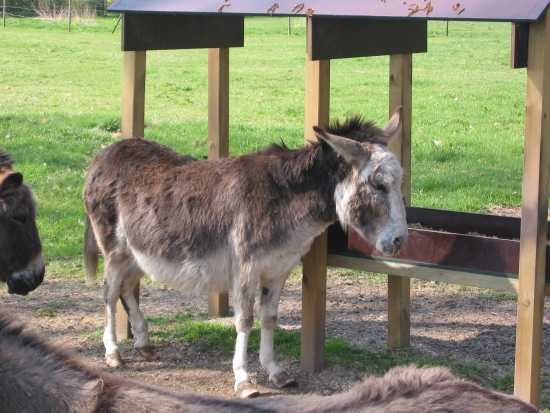 mule s