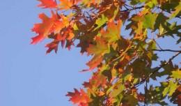 fall leavs s