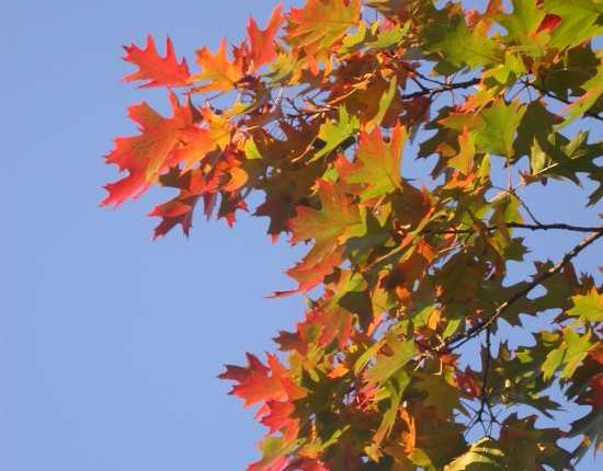 fall leavs s