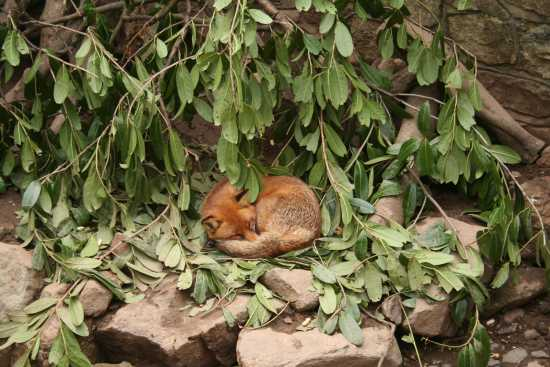 Little foxes that can destroy marriage; 30 days to intimacy.